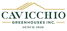 Cavicchio Logo no photo